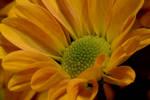 Happy flower by CastitusLilium
