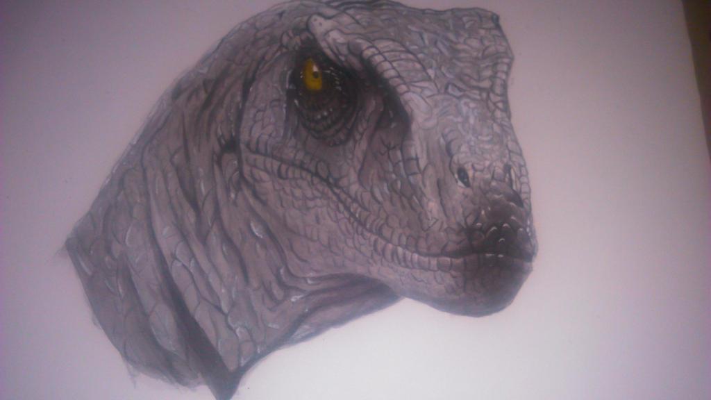 Raptor Acrylic by Re-Born93