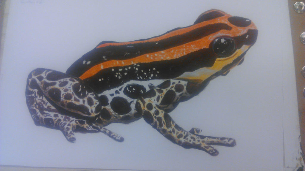 Acrilyc Frog by Re-Born93
