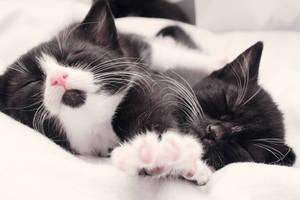 Let us sleep a bit longer, please by Yumizu-Chan