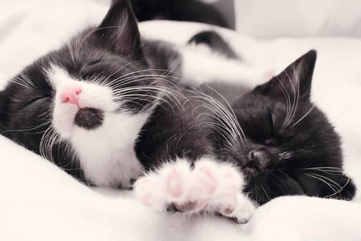 Let us sleep a bit longer, please