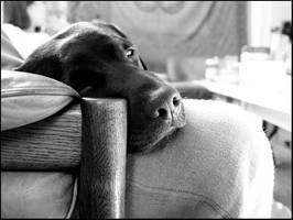 dog by uschiflex