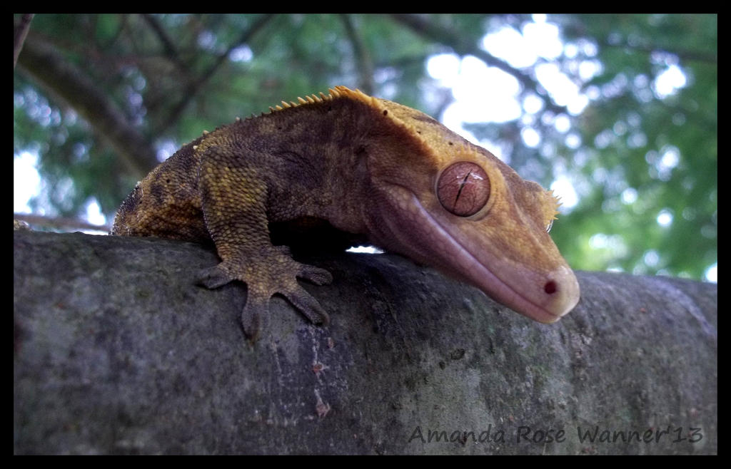 Jax The Crested Gecko by TheBumbleRaven