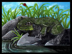Eastern Grey Tree Frog Commission by BipolarNonsense