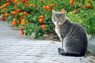 ev kedisi by evis42