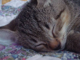 Sleeping Larry by Azimoon