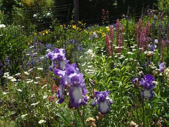 my blooming garden