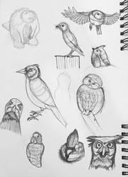 Birds Birds Birds by Z-nab27