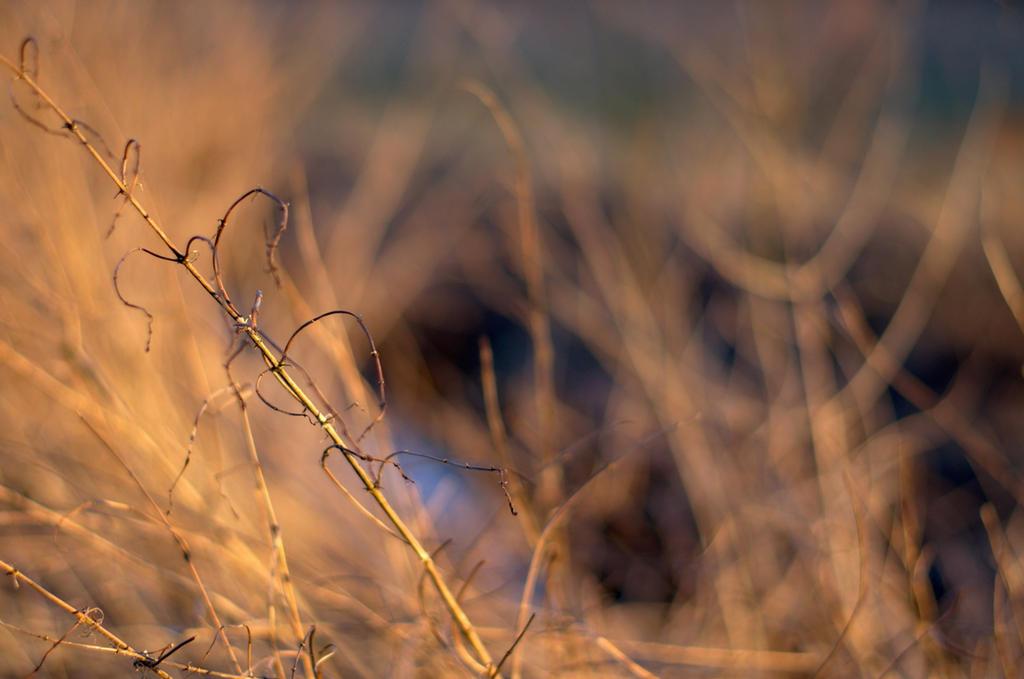 Interlude by sannwald