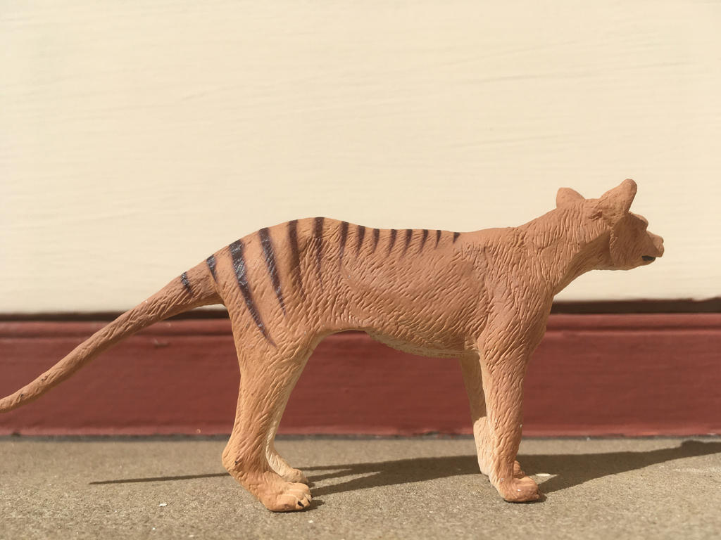 Thylacine figure  by Zebralover214
