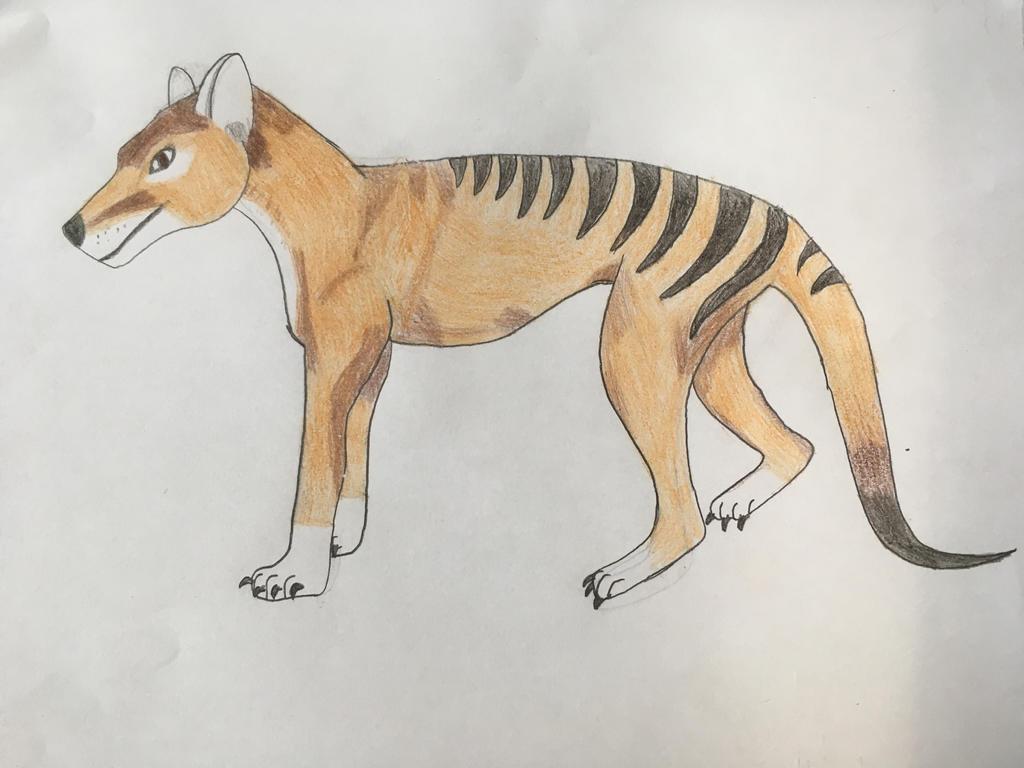 Thylacine  by Zebralover214