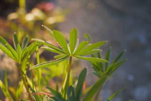 Walzing Green