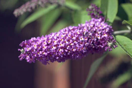 Ineffable Purple pt. 2