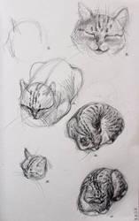 Cat by KatarzynaKostecka