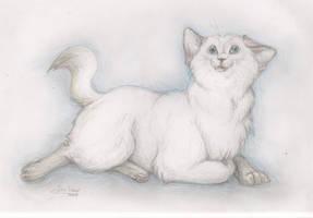 kitty by DawnFrost