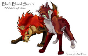 Black Blood Sisters by DawnFrost