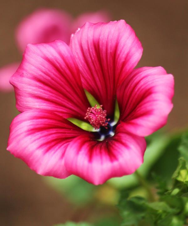Radiant Rose Petals Eg2ZDP