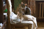 Mashka and Masyanya