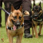 police dogs 1