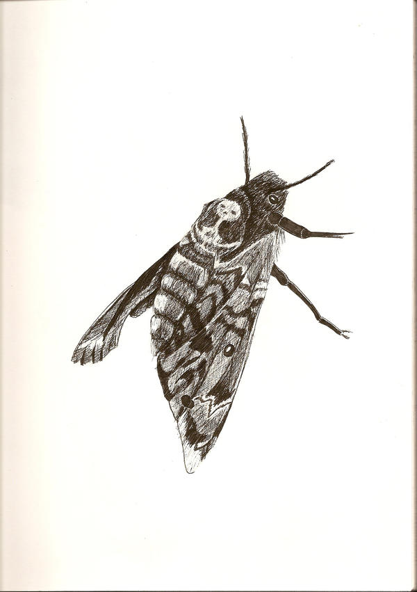 the death of the moth pdf