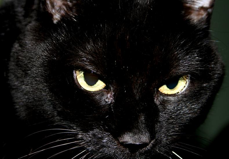 Black Panther By Portela On Deviantart: Black Panther By Shesxthexblade On DeviantArt