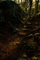 Sunlit woodland steps by A68Stock