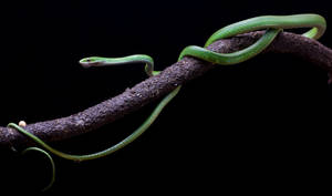 Rough green snake stock