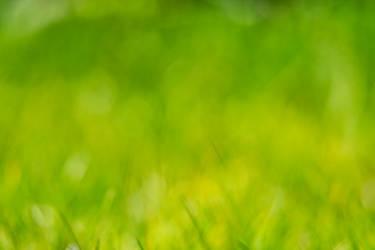 Grass bokeh texture