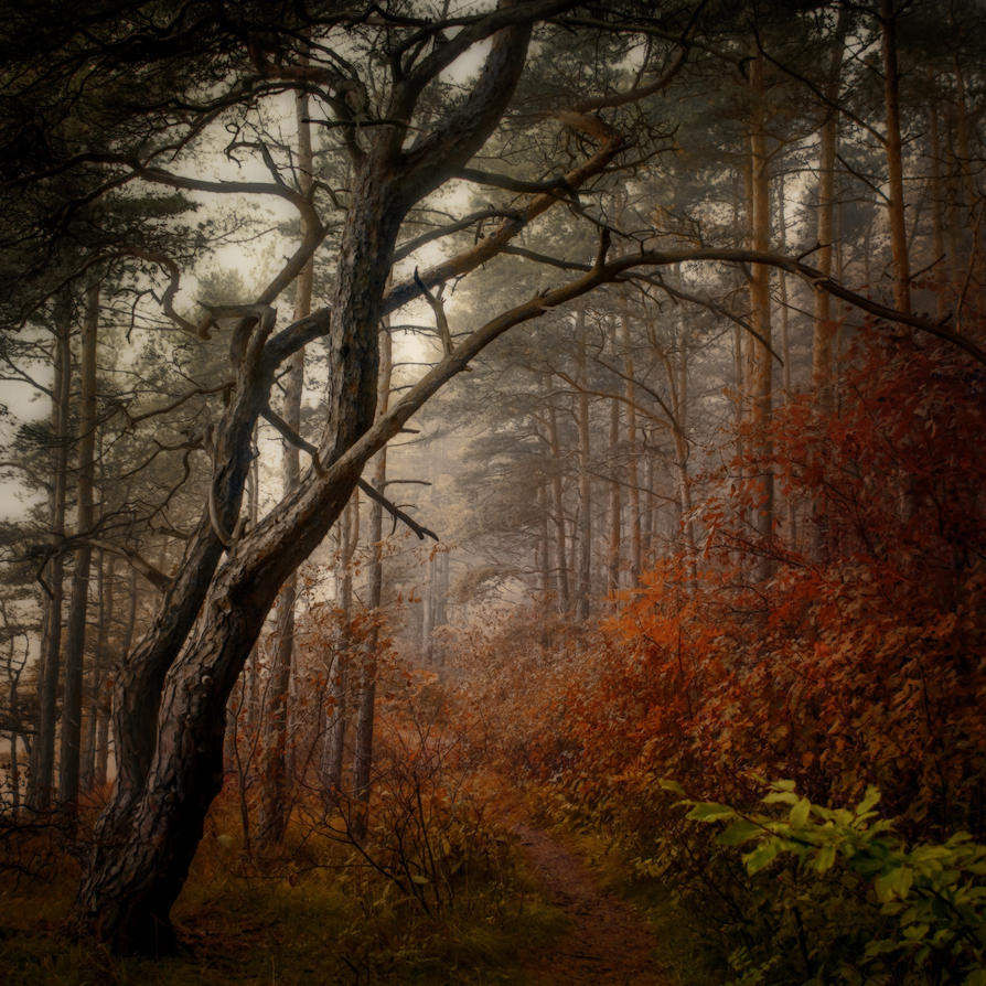 Forest-1 by EmmmBeee
