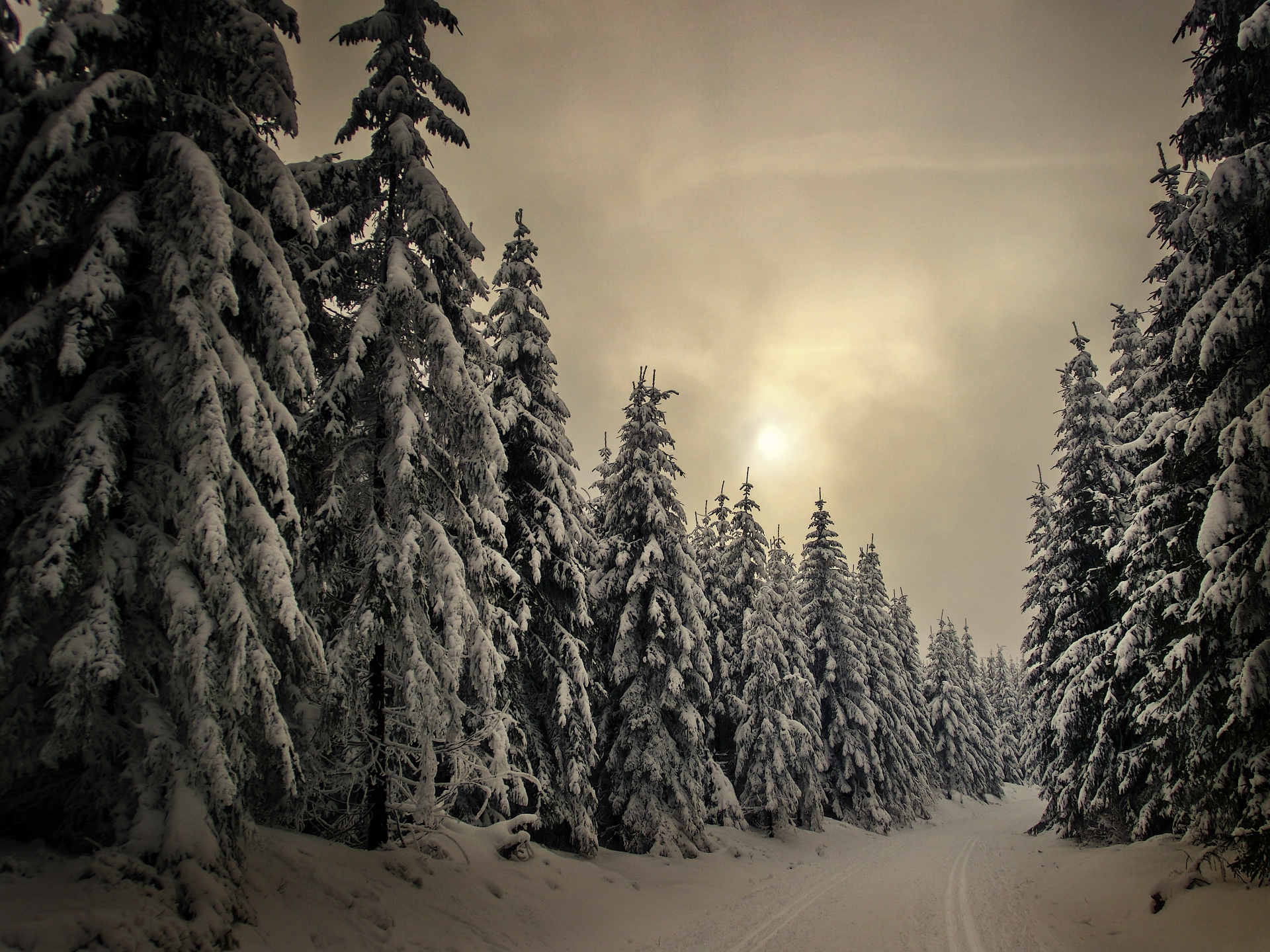 snowbound spruces by EmmmBeee
