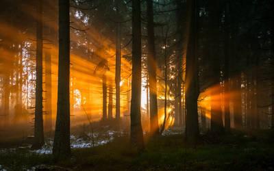 Last flare of sunlight