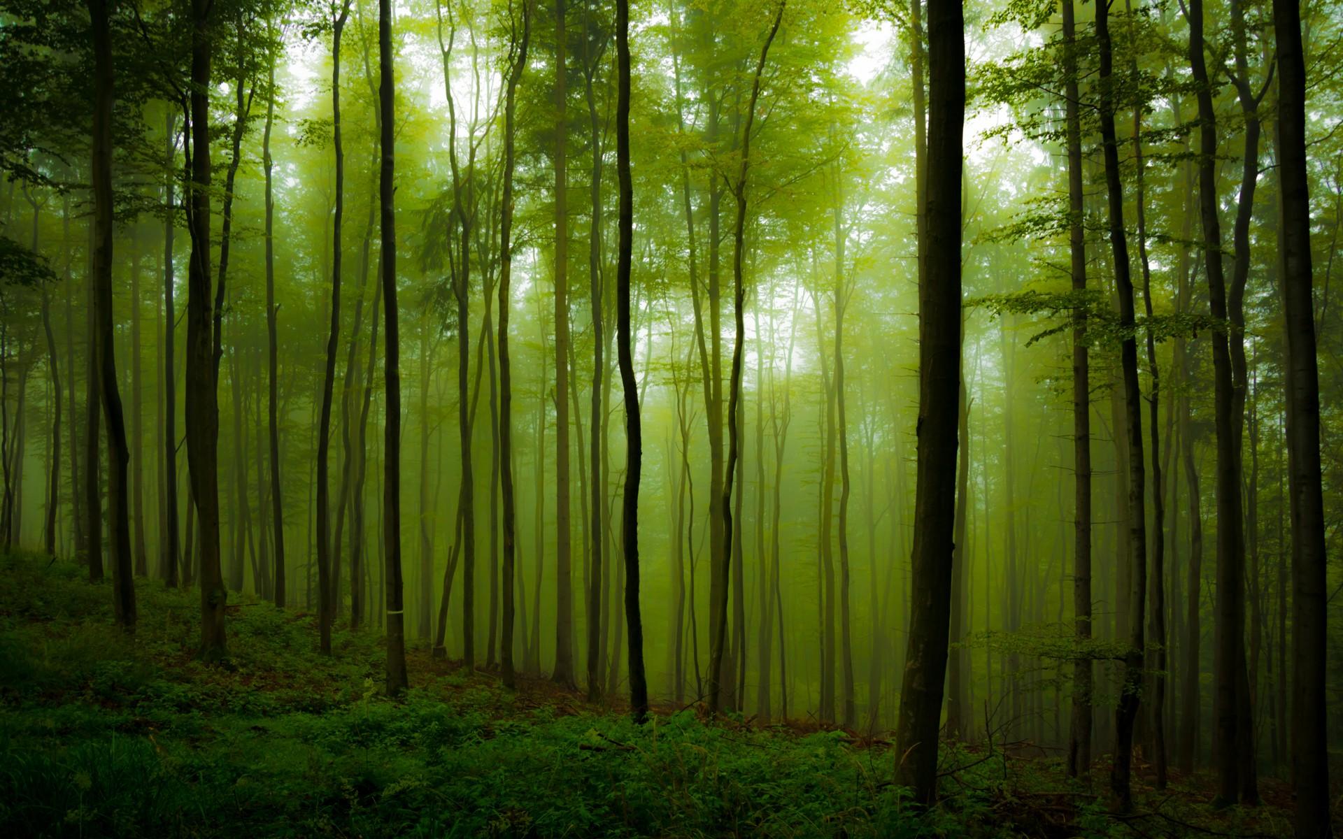 greenwood by EmmmBeee