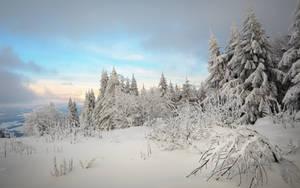 Winter Dream by EmmmBeee
