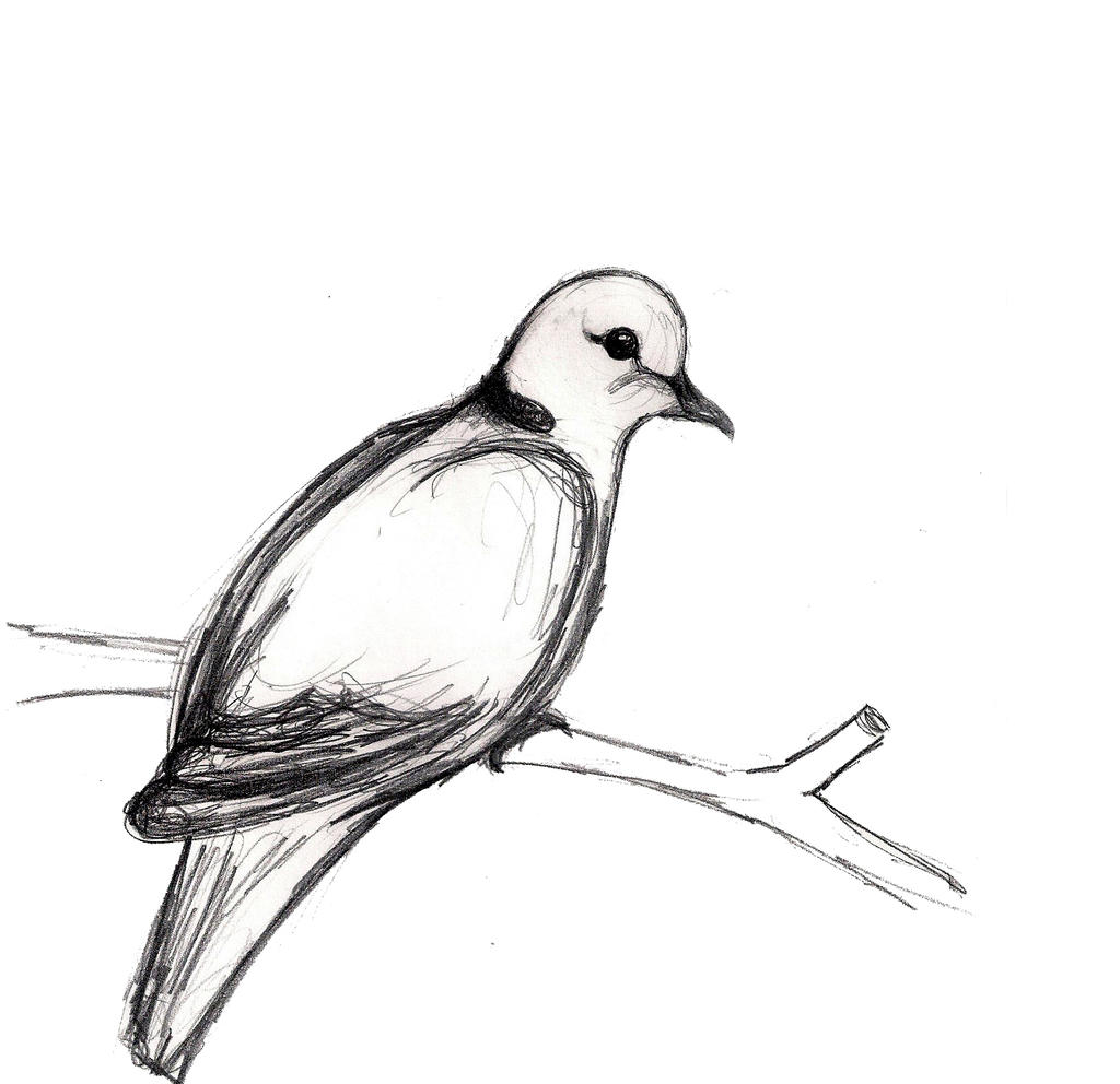 easy dove drawing - photo #30