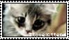 Kitten stamp by Savanah25