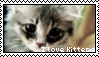 Kitten stamp by Savanah25