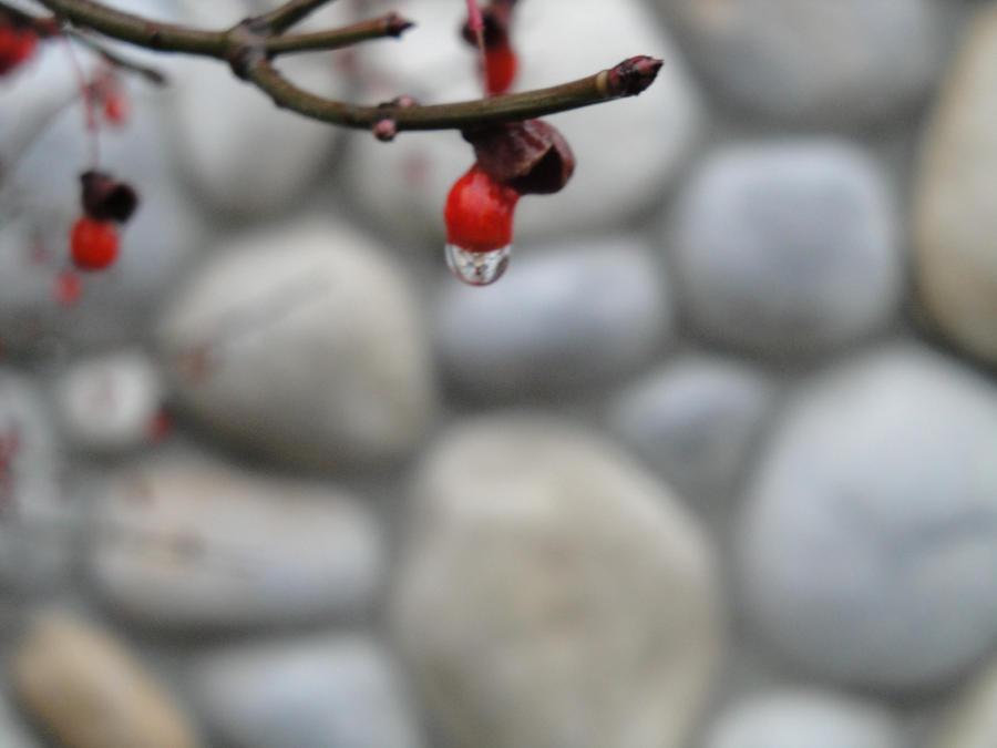 Berry by drawingfreak100