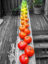 Tomato Gradiant