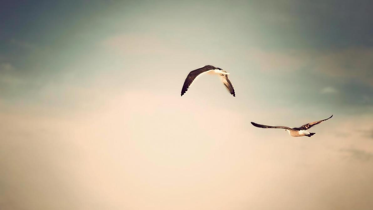 Birds Monochrome by slapmefive