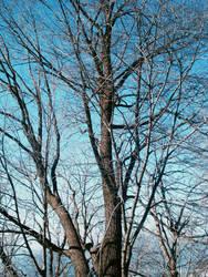 Winter.. by aruda