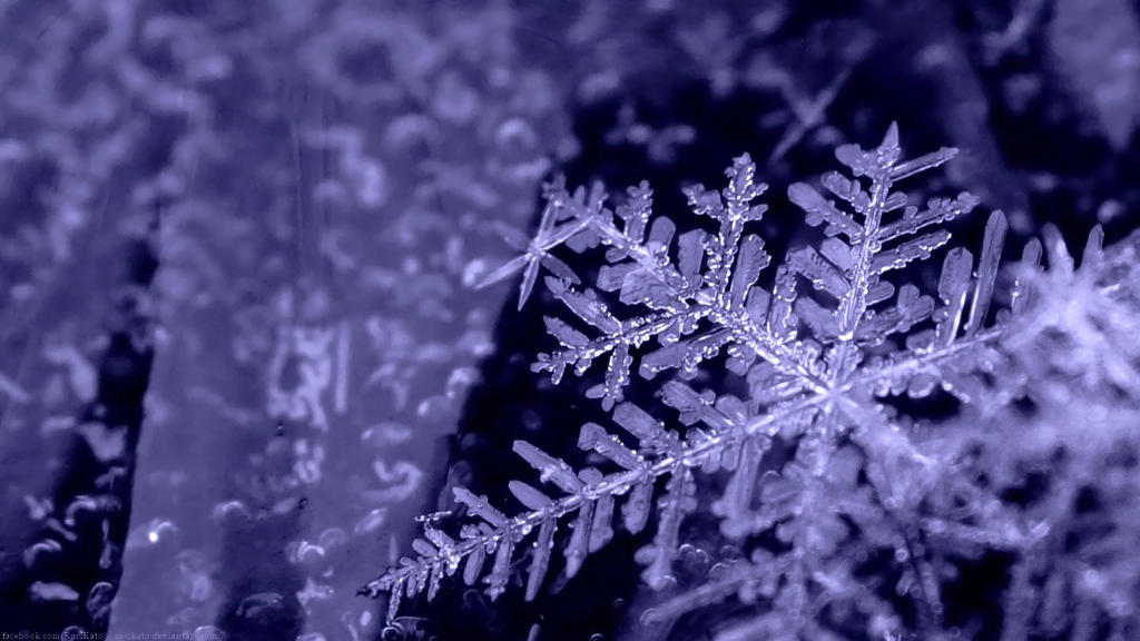 real snowflakes background - photo #6