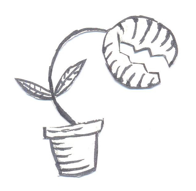 venus fly trap drawing simple