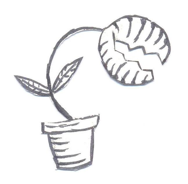venus fly trap drawing simple