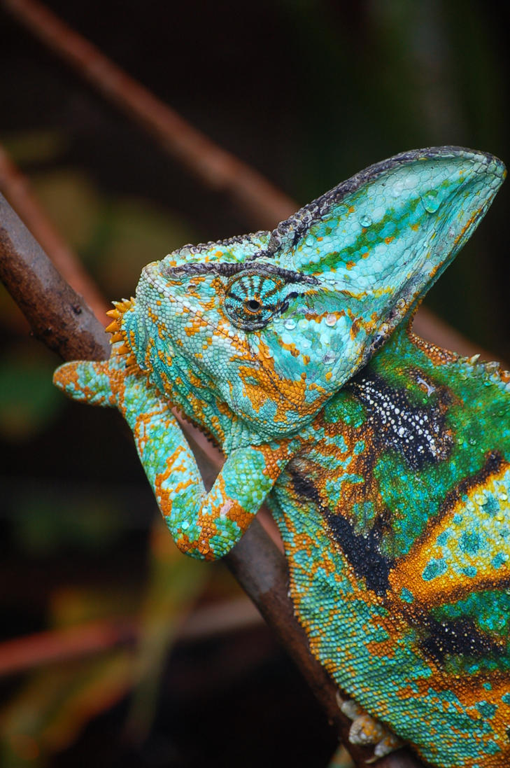 chameleon 0061 by loveandtears