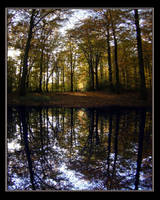 Silent Forest by Mimiguel