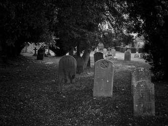 graveyard by ABY77