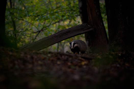 Badger II