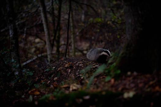 Badger III