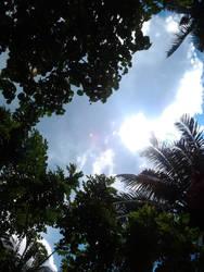 Sun Peeking Through the Leaves by Skyelher