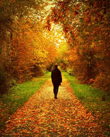 Autumn Path by anneclaires